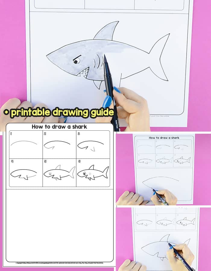 Learn How to Draw a Shark