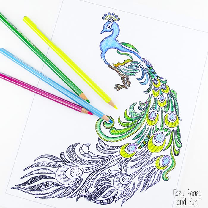 Peacock Coloring Page For Adults Easy Peasy And Fun