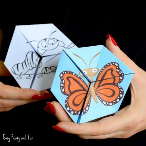 Butterfly Life Cycle Paper Toy Craft Flextangle Template