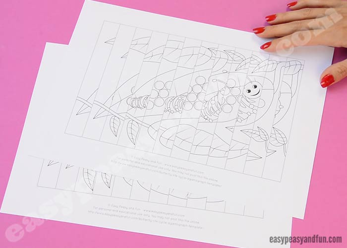 Printable Butterfly Life Cycle Agamograph Template Easy Peasy And Fun