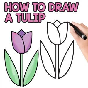 how to draw a tulip for kids easy step by step tutorial easy