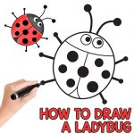 Ladybug Directed Drawing Tutorial