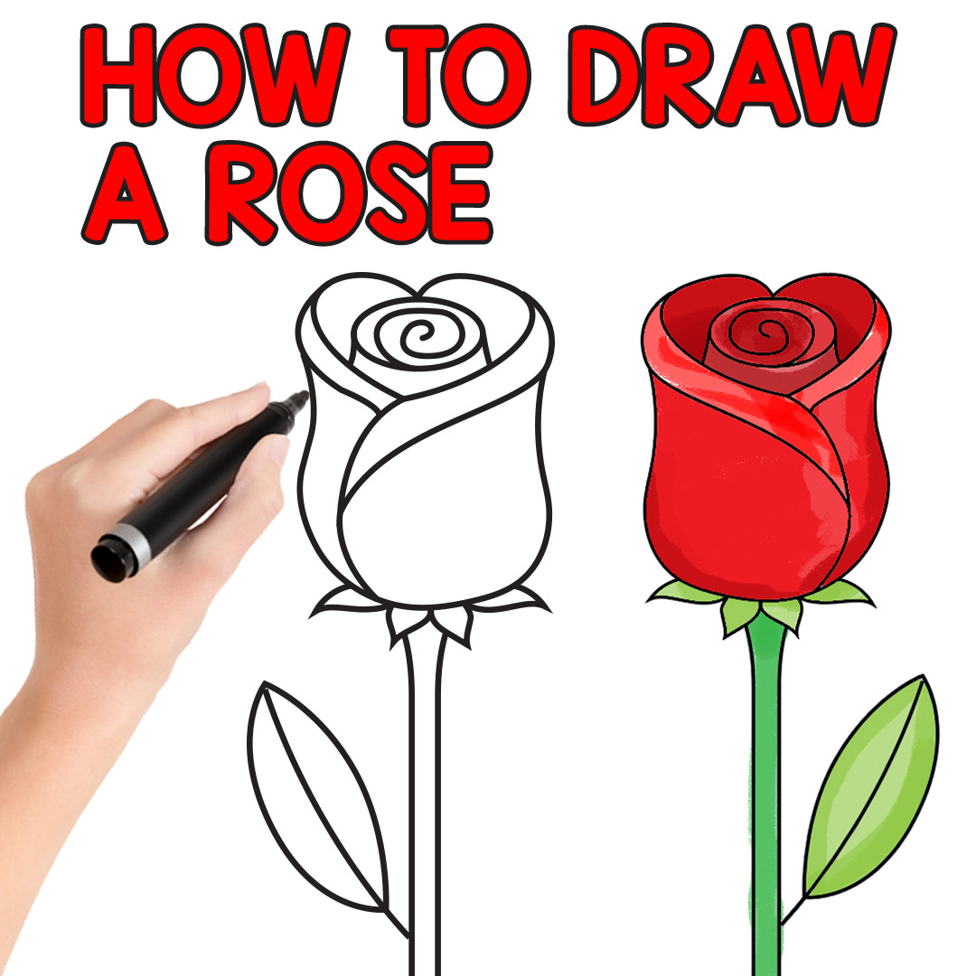 How to Draw a Rose - Easy Step by Step For Beginners and Kids - Easy ...