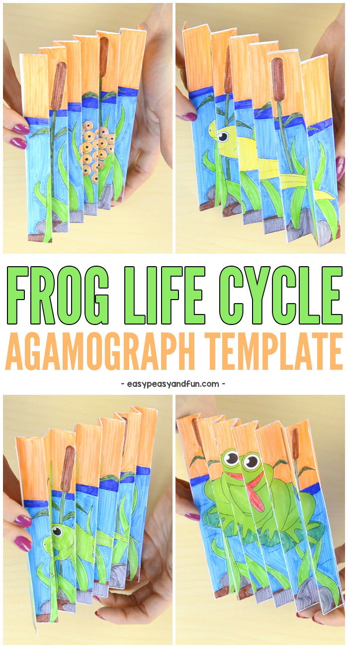 Frog Life Cycle Agamograph Template. Super Fun Sping Craft for Kids. #craftsforkids #craftstemplates #frogcrafts