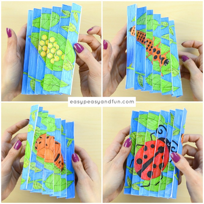 Ladybug Life Cycle Agamograph Template Craft