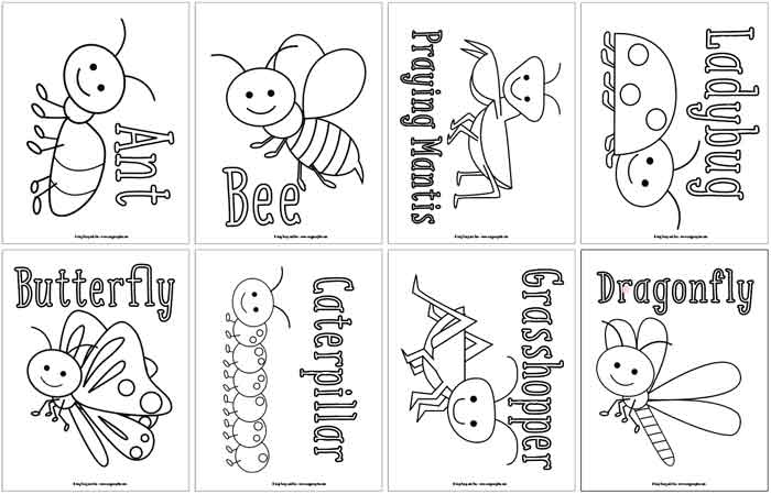 Bug Coloring Pages on printable summer coloring paper