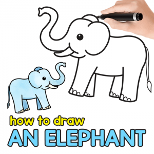 Elephant Directed Drawing