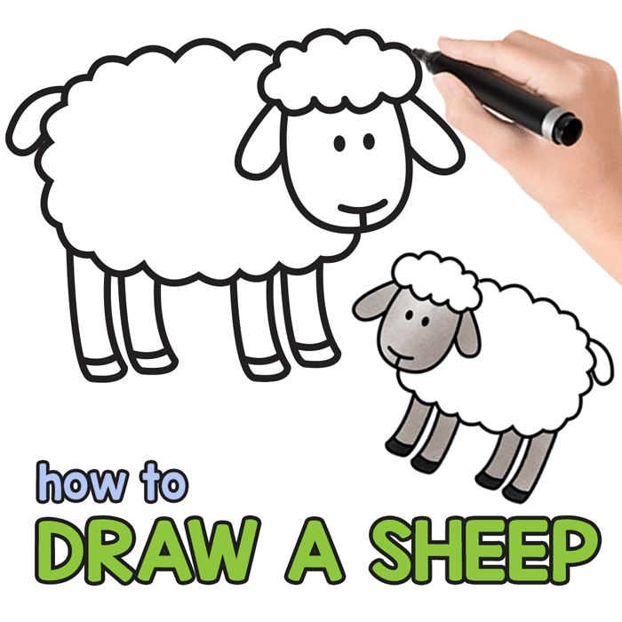 Sheep Drawing Tutorial. Directed Drawing For All Ages