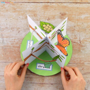3D Butterfly Life Cycle Craft 6