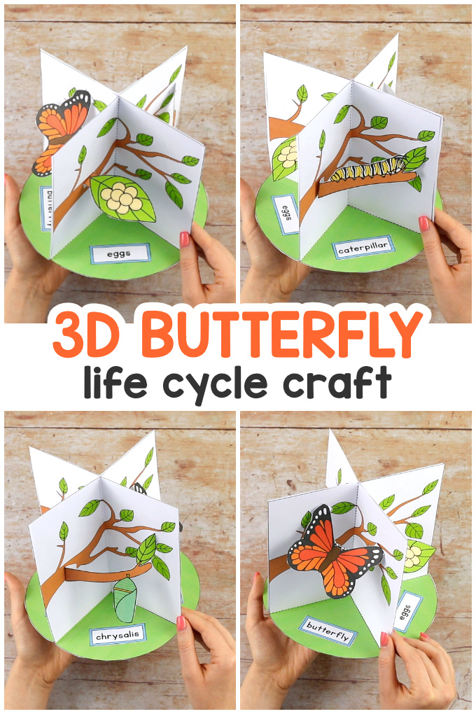 3D Butterfly Life Cycle Craft for Kids