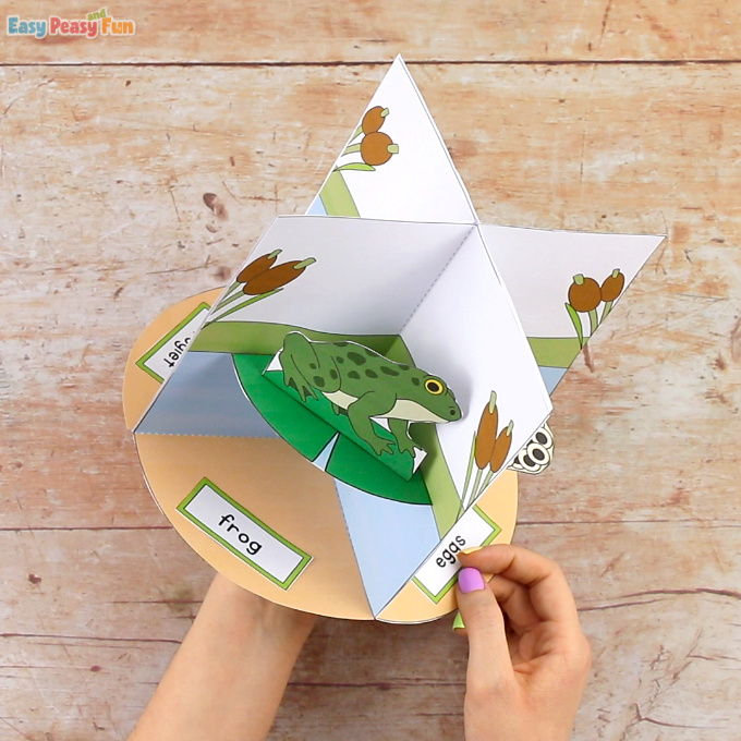 3D Frog Life Cycle Craft Frog