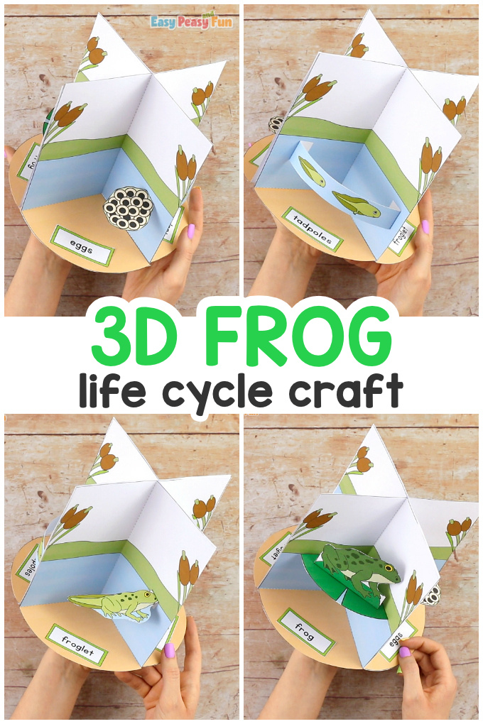 3D Frog Life Cycle Craft for Kids