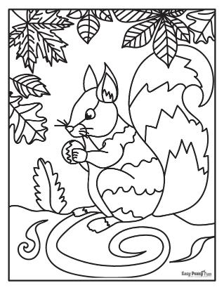 Coloriage écureuil