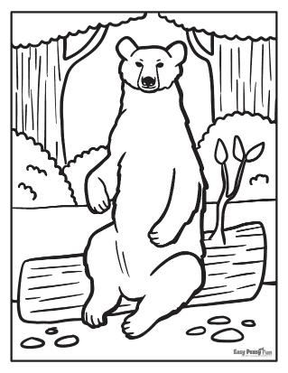 Coloriages d'ours réalistes