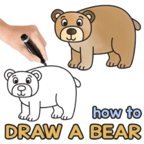 How to Draw a Bear – Step by Step Drawing Tutorial